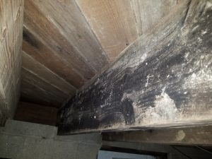 Crawl Space Mold Removal Free Mold Inspections